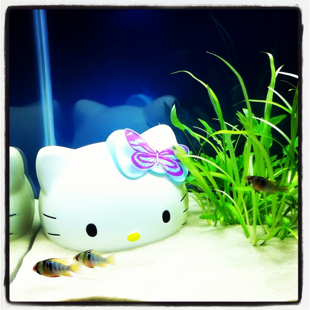 Fish-tank-hello-kitty