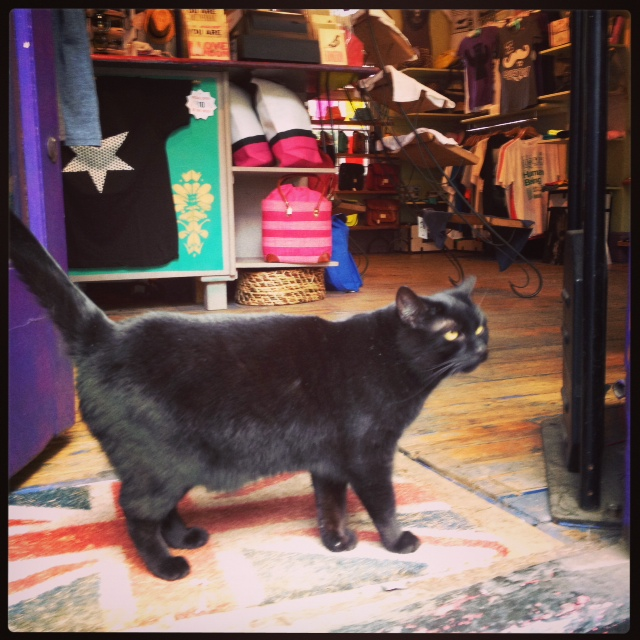 Black Cat shop Notting Hill