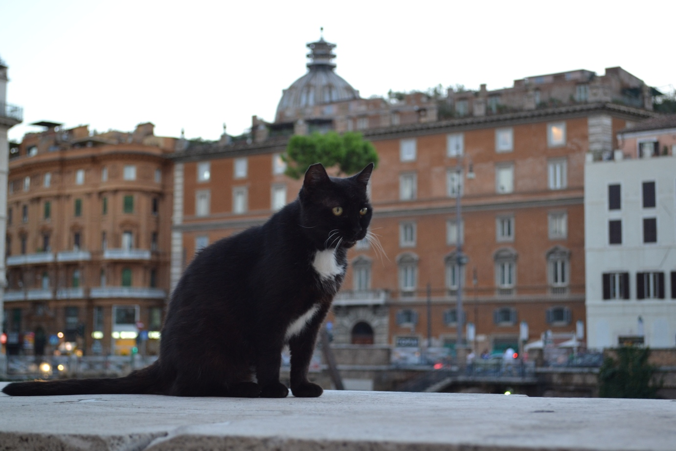 A black feline soft paw chiling in the evening at Largo Argentina